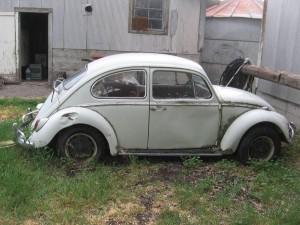 jim_66_beetle_IMG_0101